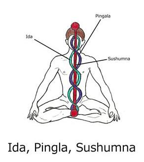 Ida, Pingla, Sushumna